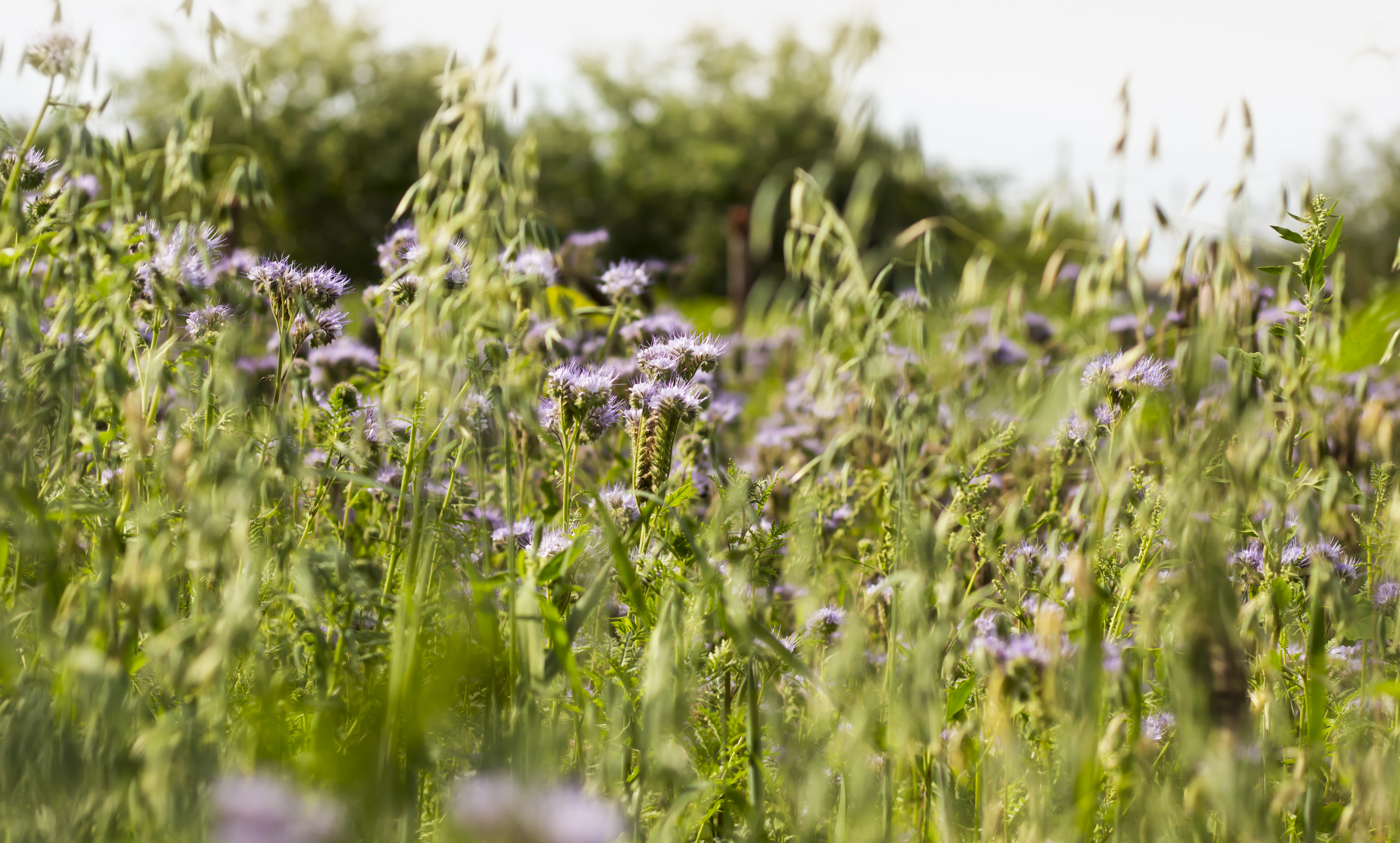 Make harbouring hayfever allergens a thing of the past!